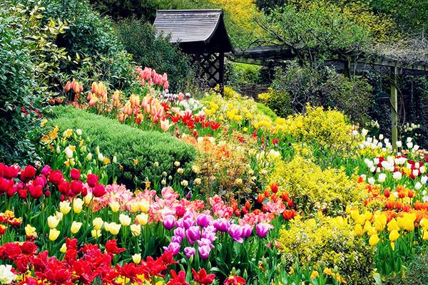 Vườn hoa Đà Lạt đẹp rực rỡ