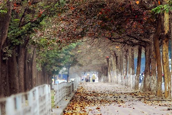 Mùa thu Hà Nội dịu dàng và thơ mộng