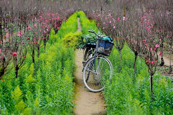 Vườn hoa Nhật Tân